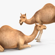 Camel Rigged for Cinema 4D. Preview 16